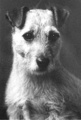 Norfolk Terrier: Babbling Binks